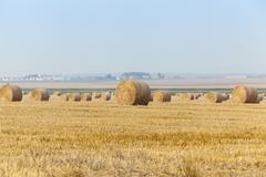Cereal farming field Kuvituskuvat