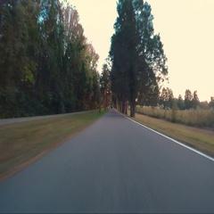 Ride Down Old Osborne with Cedar Trees Stock Footage