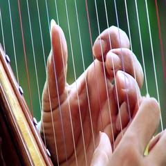 Paraguayan Harp Stock Footage