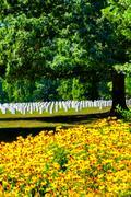 WASHINGTON D.C.,USA - AUGUST 15,2016 : Tombstones and flowers at the Arlington N Kuvituskuvat