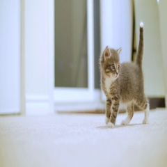Tiny Cute Kitten Standing And Looking Around And Then Getting Scared Stock Footage
