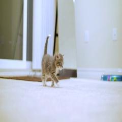 Tiny Cute Kitten Walking Towards Camera Stock Footage
