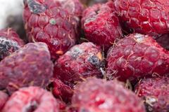 Mold on the raspberries Stock Photos