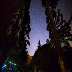 Astro Timelapse of Starry Sky over Alpine Forest Campground -Zoom In- Stock Footage