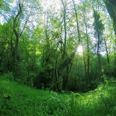 4K. Sunlight in the forest in the valley of the river Aapsta, Abkhazia. Ultra HD Stock Footage