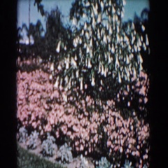 1957: natures finest sightings everywhere someones takes a moment to admire this Stock Footage