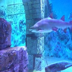 Sharks in sunken city underwater Stock Footage