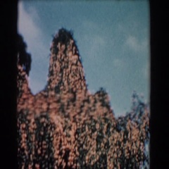 1957: boomer crop on a fruit tree top. FLORIDA Stock Footage