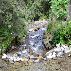 Mountain stream in the forest with big stones in Carpathians, Ukraine.  Stock Footage