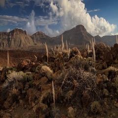 Volcano Teide landscape and Echium wildpretii in Tenerife island, Spain Stock Footage