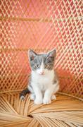I am a kitten Stock Photos