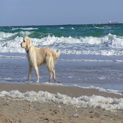 Happy white dog on the beach Stock Footage