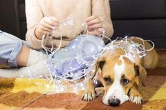 Person unwinds christmas lights with puppy Kuvituskuvat