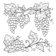 Skatch of grape branches Stock Illustration