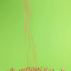 Falling grains wheat on heap of wheat on a green screen Stock Footage