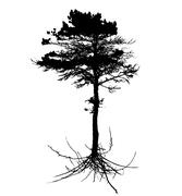 Tree Silhouette with root system Isolated on White Background. V Stock Illustration