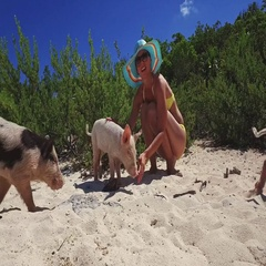 Wild, swimming pig contact with tourists on Big Majors Cay in Bahamas Stock Footage