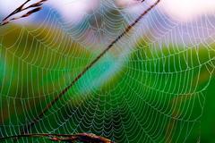 Spider web Kuvituskuvat
