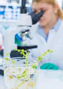 Green plant research in biological laboratory Stock Photos
