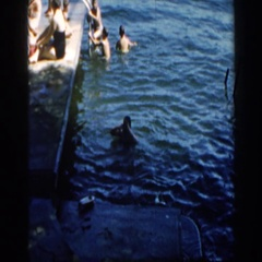 1960: children playing outside in a body of water and by a dock splashing around Stock Footage
