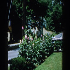 1960: outside view of a yard with flowers and sunshine. BRIGHTON, MICHIGAN Stock Footage