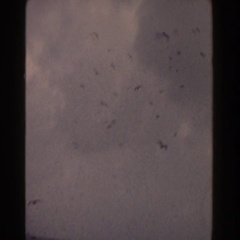 1960: buzzards flying over an ocean. Stock Footage