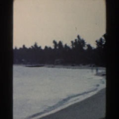 1960: large animal in an enclosed area with different colors standing tall  Stock Footage