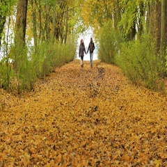 Young model couple in love - autumn park nature - couple man and woman walking Stock Footage