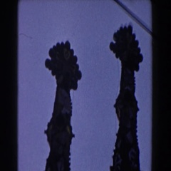 1959: four european cathedral steeples. BARCELONA SPAIN Stock Footage