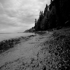 Pacific Northwest Forest Beach Waves Noir Stock Footage