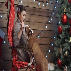 A young girl playing with bulldog at xmas eve Stock Footage