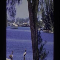 1966: beautiful bay PUERTO RICO Stock Footage