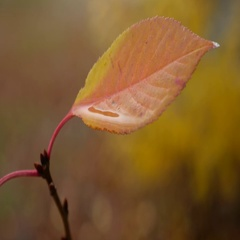 Wet yellow leaf lone tree on yellow background autumn rain Stock Footage