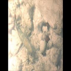 Vintage 16mm film, 1959, Puerto Rico fish in water, a unique POV... Stock Footage