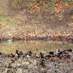 Man cross-country cycling splashes through a puddle, shot on R3D Stock Footage