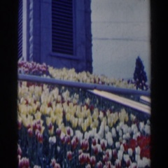 1963: an amazingly beautiful park with rich flower garden where people relax Stock Footage