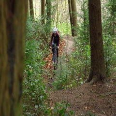 Young man cross-country cycling in forest, front view, shot on R3D Stock Footage