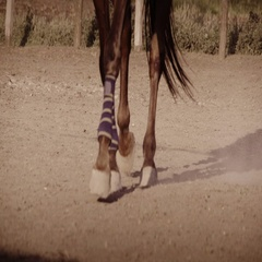 Close up of the horse's hooves which quickly jumps during the race Stock Footage