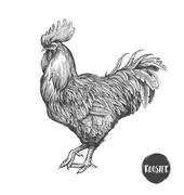 Rooster in graphic style, hand drawn illustration. Symbol of 2017. Vector Stock Illustration