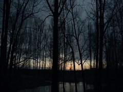 Silhouettes of trees without leaves with fast rising-timelapse Stock Footage