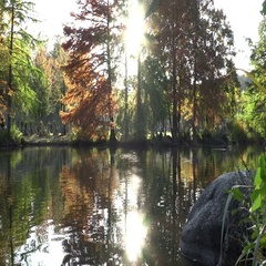 Trees reflection in the lake. Autumn time. Sunset Stock Footage