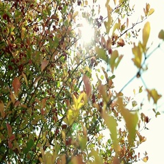 Branches of viburnum in late autumn Stock Footage
