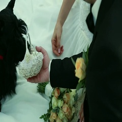 Scottish Terrier brought the wedding rings in a basket for the bride and groom Stock Footage