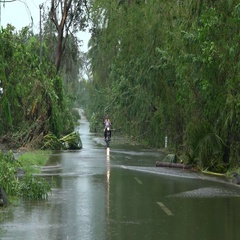 Road Cleared Of Debris In Aftermath Of Hurricane Stock Footage