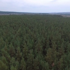 Aerials. Big beautiful pine forest with a bird's eye view Stock Footage