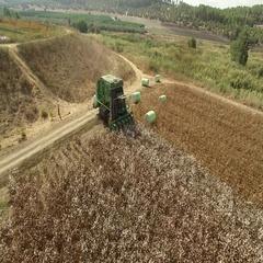 Combine shortness of cotton Stock Footage
