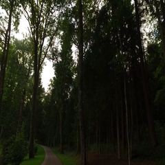 Scary forest to walk alone through Stock Footage