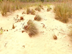 Hot sand with some dried grass bushes Stock Footage