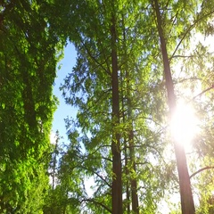 Intensive sun rays behind green tree crowns in the park Stock Footage