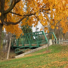 Autumn leaves and Bridge Stock Footage